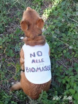 cane no biomasse